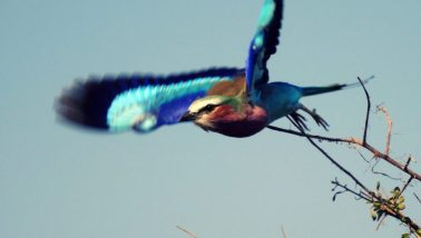 Vogel im Krüger Park