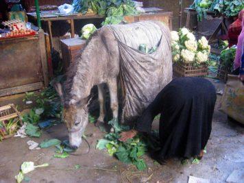 Lebensmittel Bazar