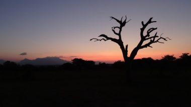 Sonnenuntergang im Krüger Nationalpark