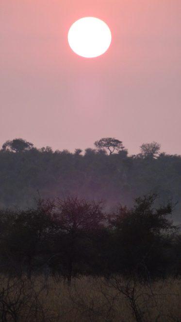 Sonnenaufgang im Krüger